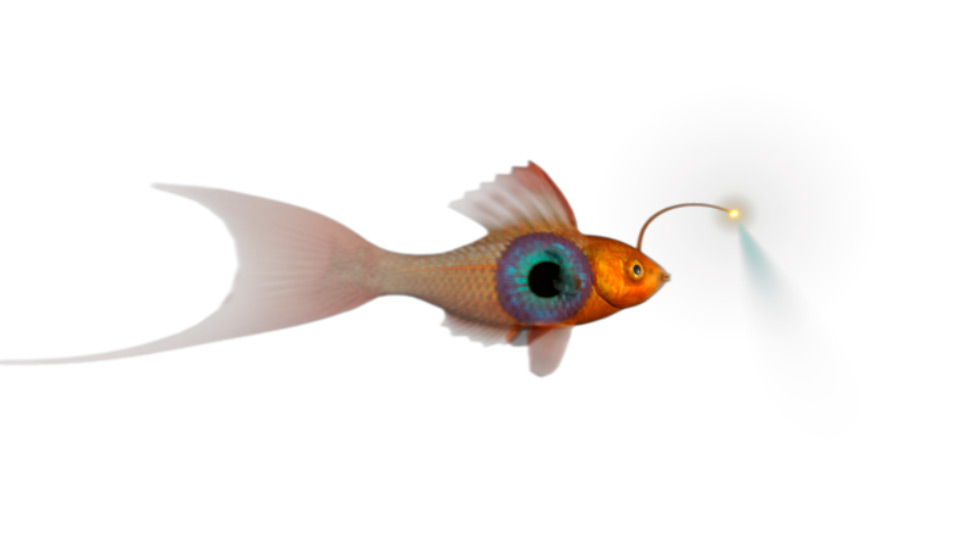 Strange Fish Character Animation