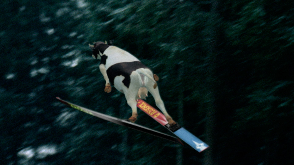 Swiss Milk Skiing Cow Character Animation